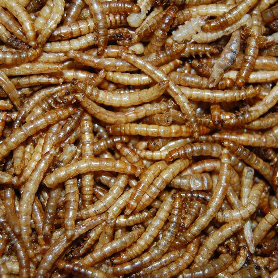 Gedroogde meelwormen - JUNAI
