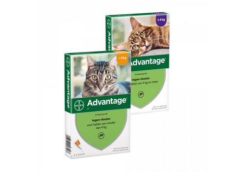 Bayer Advantage voor katten 4 pipetten
