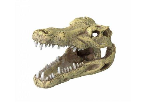 Aqua D'ella Krokodillenschedel