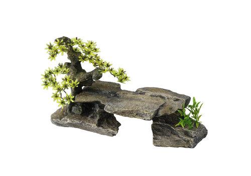 Aqua D'ella Bonsai steen met planten