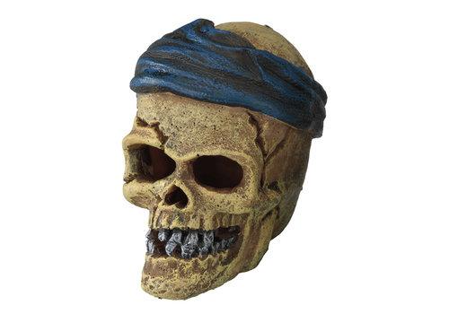 Aqua D'ella Piraten schedel hoofdbreuk