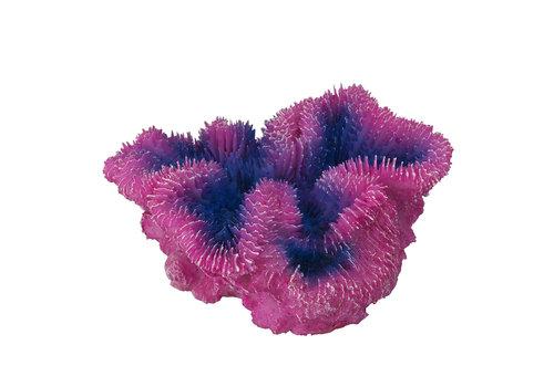 Aqua D'ella Koraal symphylia Paars