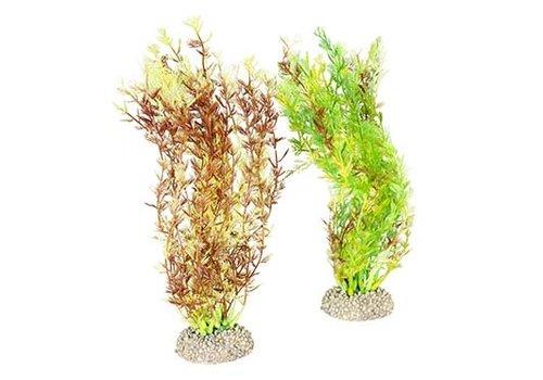 Aqua D'ella Plant egeria densa Gemengde kleuren