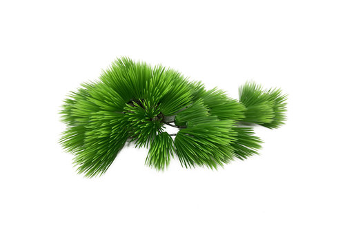 Aqua D'ella Eleocharis Groen 22cm