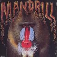Mandrill | Mandrill