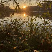 Greg Foat, James Thorpe | Photosynthesis