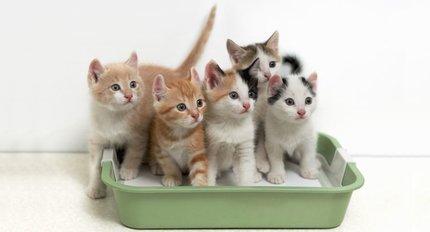 Kattenbakken