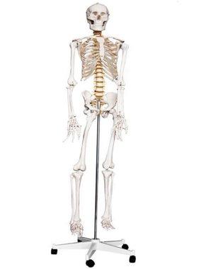 vidaXL Skelet op standaard 188 cm
