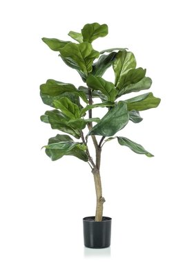 Emerald Vioolbladplant 90 cm