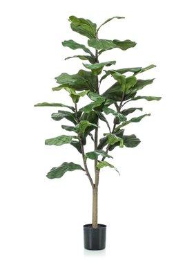 Emerald Vioolbladplant 120 cm