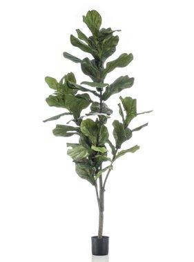 Emerald Vioolbladplant 160 cm