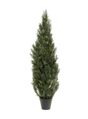 Emerald Cederboom 150 cm
