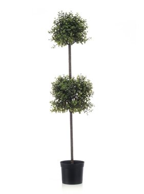 Emerald Buxus dubbel 120 cm