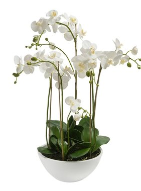 Emerald Kunstplant orchidee wit 80 cm 20.335C