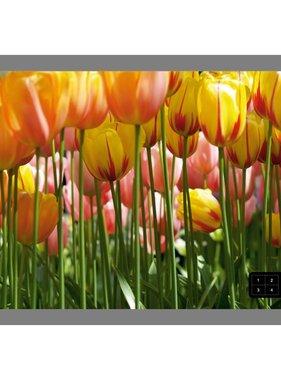 AG Design Tulpin Big Fotobehang 4D ()