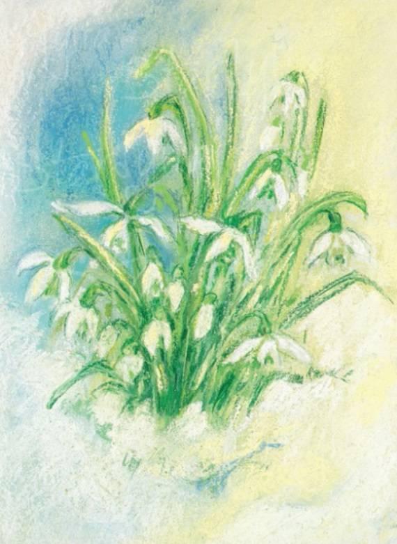 Marjan van Zeyl, Sneeuwklokjes  (308)