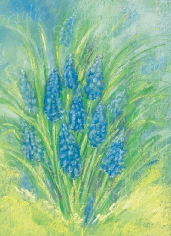 Marjan van Zeyl, Blauwe druifjes  (313)