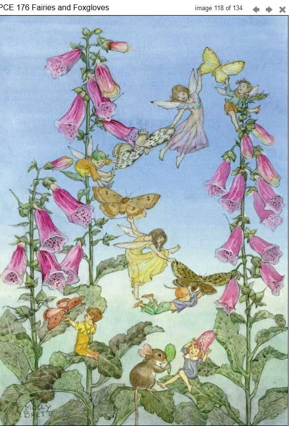 Molly Brett, Fairies and Foxgloves, PCE 176