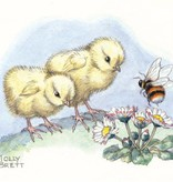 Medici Molly Brett, Two Chicks meet a Bee  PCE 221