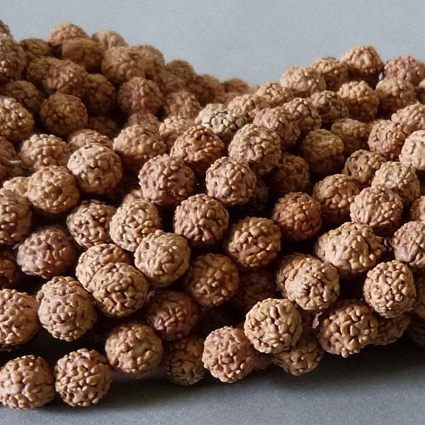 Rudraksha Samen Perle 6 ,3 mm