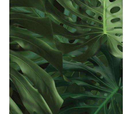 KEK Amsterdam Fond d'écran Tropical Monstera feuilles papier polaire vert 97,4x280cm