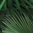 KEK Amsterdam Wallpaper Tropical Palm leaves green petal paper 97,4x280cm