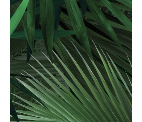 KEK Amsterdam Papier peint Feuilles de palmier tropical papier intissé vert 97,4x280cm