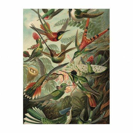 KEK Amsterdam Houten paneel  Exotic Birds S 45x60cm