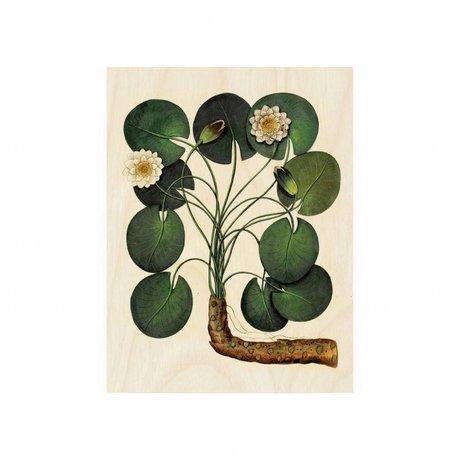 KEK Amsterdam Panneau de bois Lily botanique eau S 45x60cm