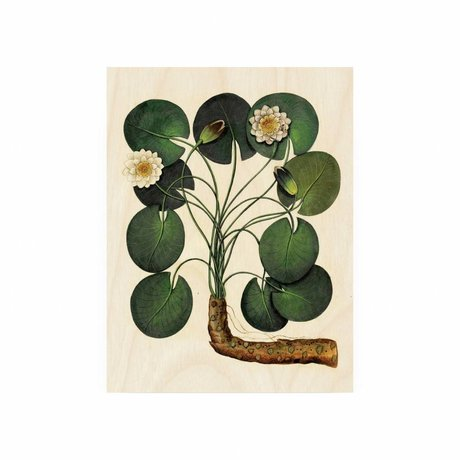 KEK Amsterdam Wooden panel Botanical Water lily S 45x60cm