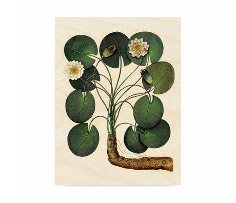 KEK Amsterdam Holzplatte Botanical Seerose M 60x80cm