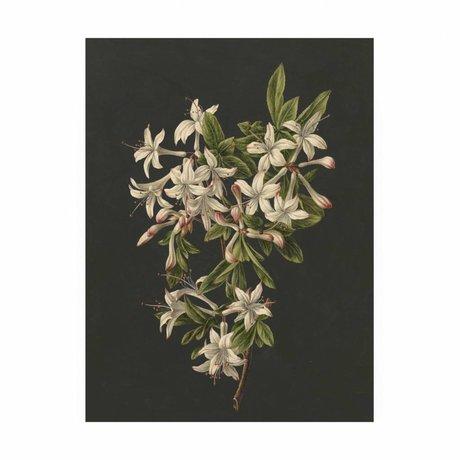 KEK Amsterdam Panneau de bois Royal White Fleurs 2M 60x80cm