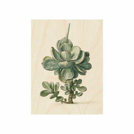 KEK Amsterdam Panneau en bois Plante botanique S 45x60cm
