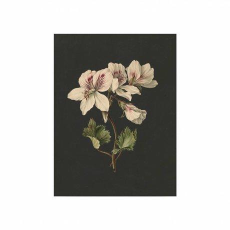 KEK Amsterdam panneau en bois Fleurs blanches 1 S de 45x60cm