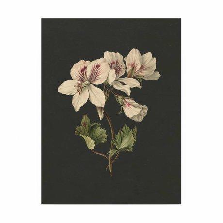 KEK Amsterdam Panneau de bois Fleurs blanches 1M 60x80cm