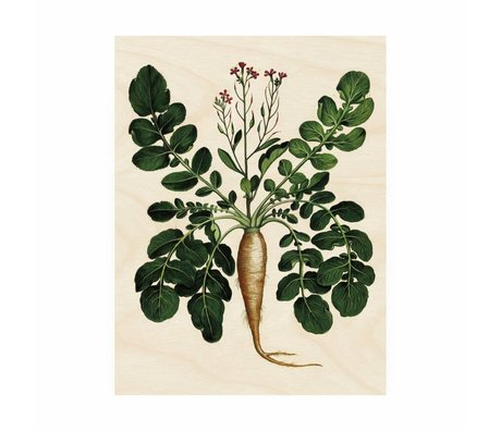KEK Amsterdam Panneau en bois botanique Plant Root M 60x80cm
