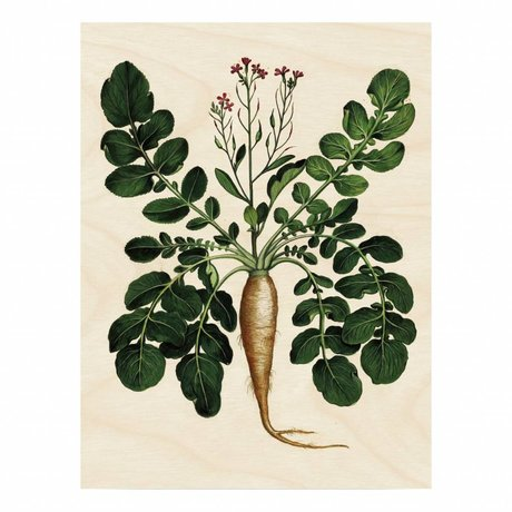 KEK Amsterdam Panneau en bois botanique Plant Root L 75x100cm