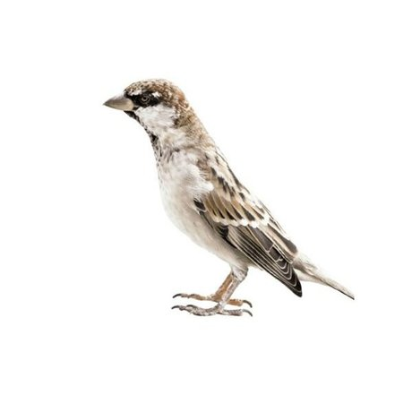 KEK Amsterdam Muursticker Sparrow 2 Forest friends bruin 14x11cm