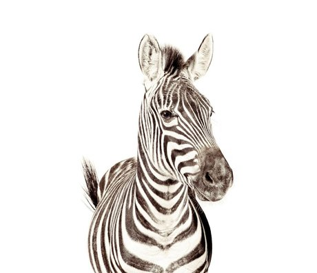 Groovy Magnets Magnetic wallpaper zebra small premium vinyl with iron particles 63.5x265 cm
