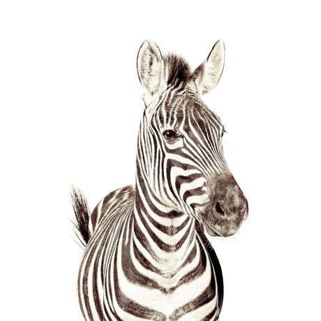 Groovy Magnets Magnetische Tapete Zebra kleines Premium-Vinyl mit Eisenpartikeln 63,5x265 cm
