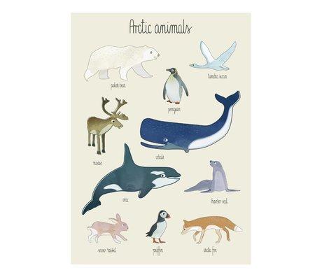 Sebra Poster Arktische Tiere multicolor Papier 50x70cm