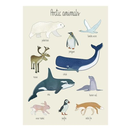 Sebra Poster Animaux arctiques multicolore papier 50x70cm