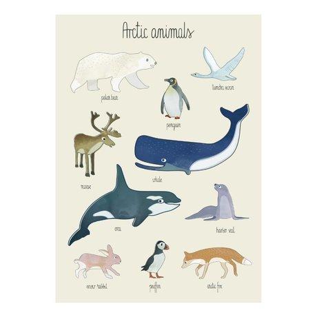 Sebra Poster Arctic animals multicolor papier 50x70cm