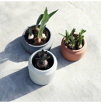 Blumen und Pflanzer