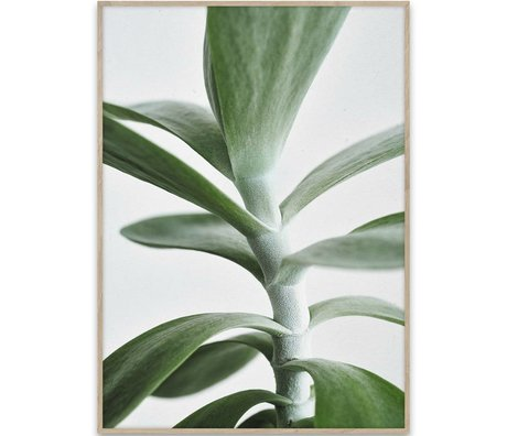 Paper Collective Poster Green Home 04 papier blanc vert 70x50cm