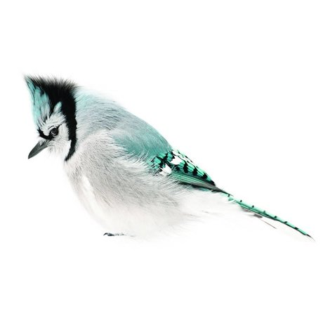 KEK Amsterdam Sticker Blue Jay, Bleu, 15x8cm, collection d'oiseau