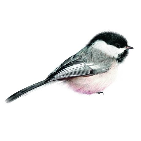 KEK Amsterdam Wall Decal 13x6cm Chickadee, Blue, Bird Collection