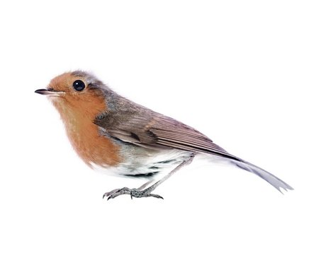 KEK Amsterdam Wall Decal Robin Brown, 15x7cm, Bird Collection