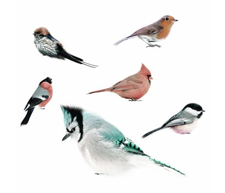 KEK Amsterdam Wall Stickers Birds Set of 6