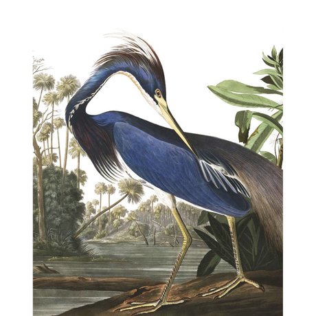 KEK Amsterdam Louisiana Heron mehrfarbige Vliestapete Tapete 142.5x180cm